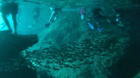 GO WEST Diving: school of fish at the back of cave