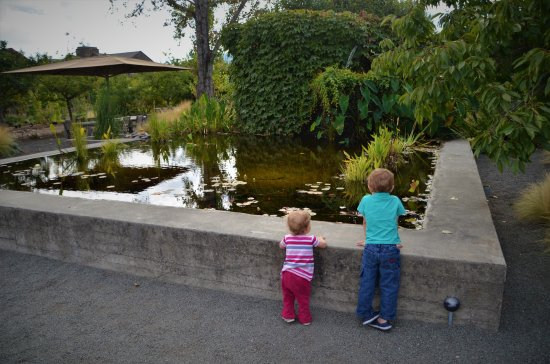 Rutherford, CA: Cement Pond