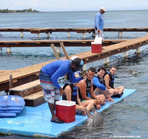 Coxen Hole, Honduras: Dolphin Encounter - Anthony's Key, Roatan, Honduras