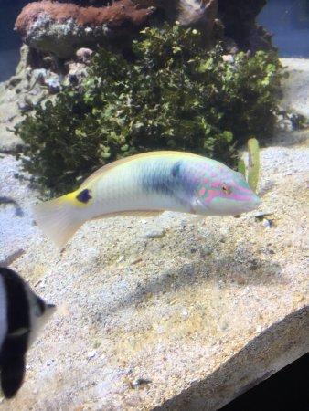 Aquarium des Lagons Nouvelle Caledonie: photo2.jpg