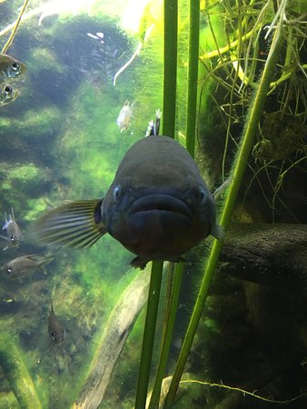 Aquarium des Lagons Nouvelle Caledonie: photo3.jpg