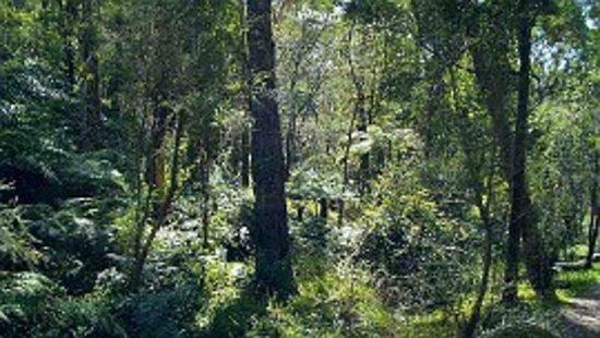 Croydon, Australië: Warranwood Reserve