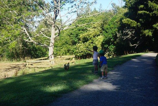 Hamilton, New Zealand: Great walks here with kiddos