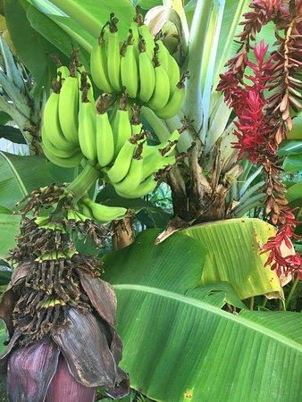 Paki Maui Resort: photo2.jpg