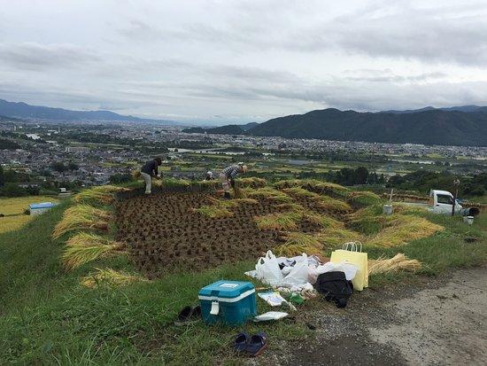 Chikuma, Japan: 收割農作物