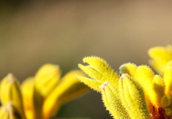 Dunsborough, Αυστραλία: Local flora.
