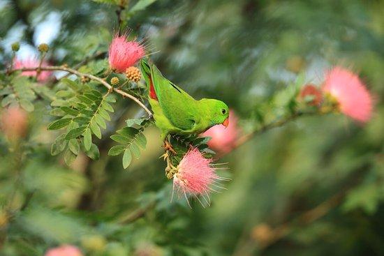 Nature's Nest: photo1.jpg