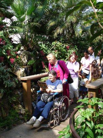 Butterfly Rainforest: Ферма бабочек . Гейнсвил