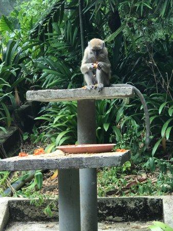 Kuala Lumpur Bird Park: photo1.jpg