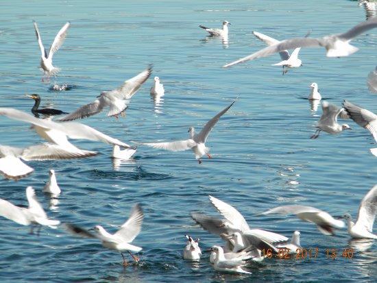 Sesto Calende, Italy: Uccelli in volo sul Ticino