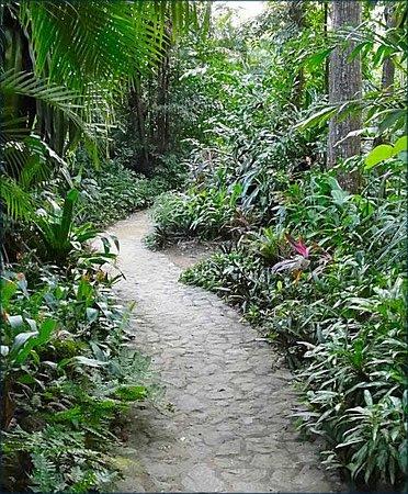 Sandy Bay, Honduras: сад