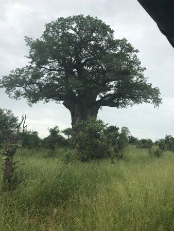 Chiredzi, Zimbabwe: Balboa