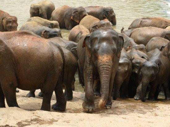 Pinnawala, Sri Lanka: Baddags