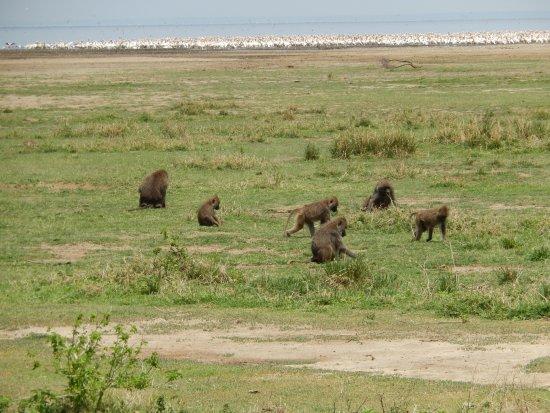 Lake Manyara National Park, Tanzania: Lake Manyara