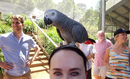 Maleny, Australia: Bird World Aviaries