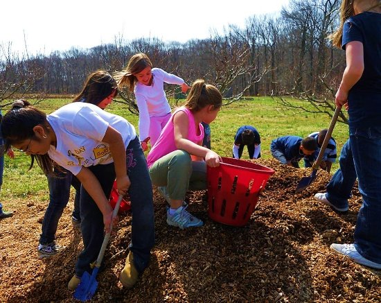 Morrisville, PA: Girl scouts mulching the orchard