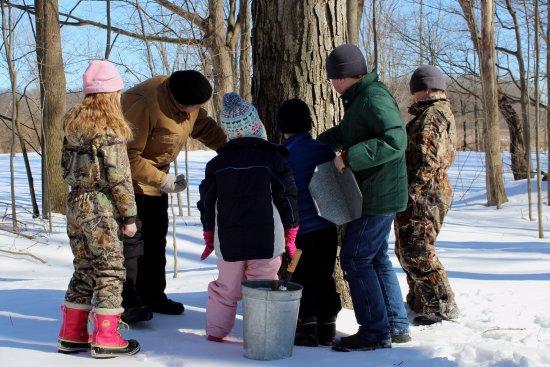 Danville, PA: Montour Preserve Maple Sugaring