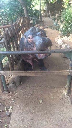 Hoedspruit, แอฟริกาใต้: photo1.jpg