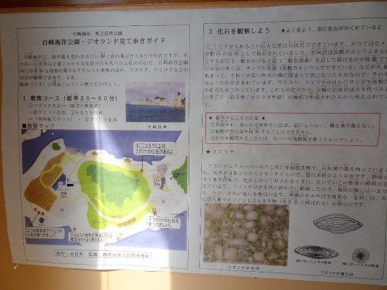 Yura-cho, Japan: 化石ポイント
