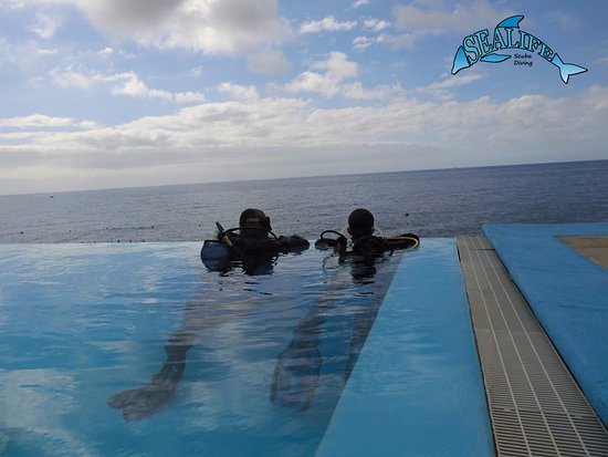 Sealife Scuba Diving