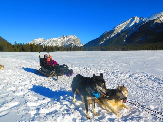 Snowy Owl Sled Dog Tours: Out on Goat Pond