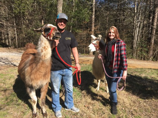 Smoky Mountain Llama Treks - Day Tours: photo0.jpg