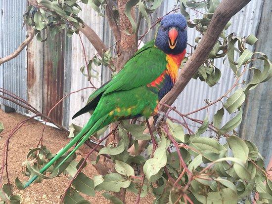 Whiteman, Australia: photo9.jpg