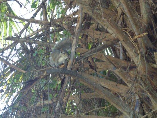 จูปีเตอร์, ฟลอริด้า: Squirrel Paradise