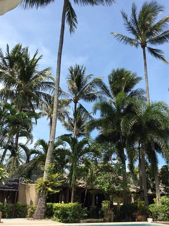 Koh Samui Resort : photo4.jpg