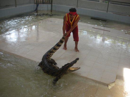Chalong, Thailand: spettacolo crocodile world