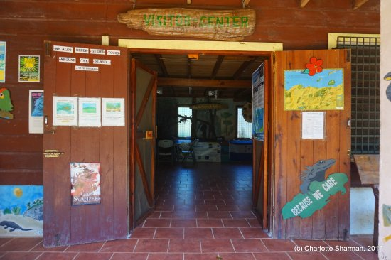 Find out more about Utila's iguanas in our Visitor's Centre & Exhibition