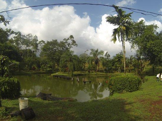 Puerto Viejo de Sarapiqui, Costa Rica: vu de l'espace restaurant