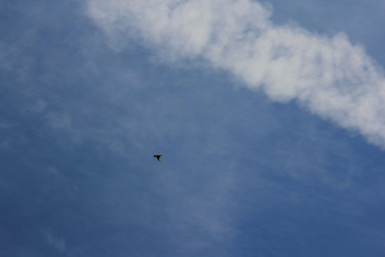 Grimsby, Canada: Birs in the sky