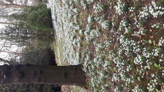 Alnwick, UK: Howick Hall Gardens