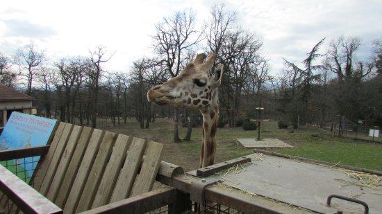Ardeche, France: Girafe