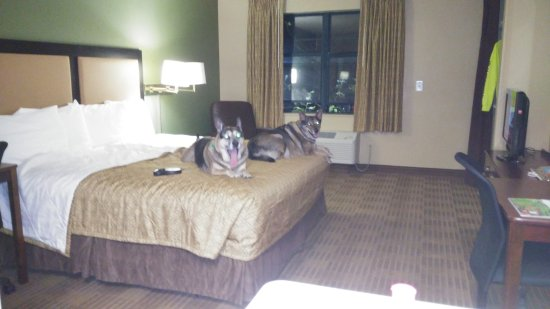 Extended Stay America - Santa Barbara - Calle Real: Relaxing doggies are happy doggies.