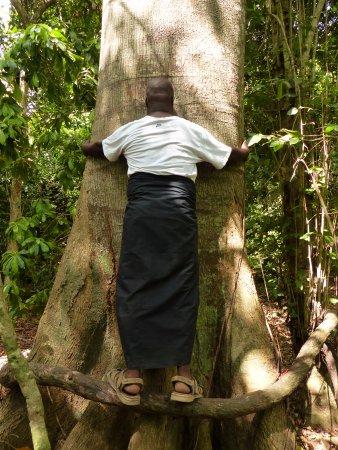 Kenyaways Beach Bed & Breakfast: Visit the sacred forest