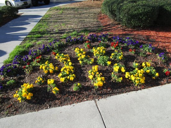 Residence Inn Wilmington Landfall: Flowers at front entrance