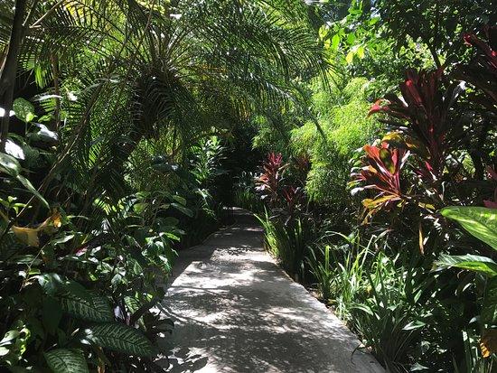 Pachira Lodge: Fotos del compeljp Pachira, sin duda lo mejor de nuestras vacaciones en Costa Rica, fue tortugue