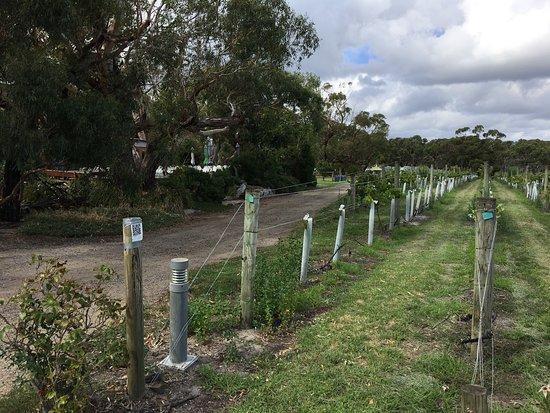 Dromana, Avustralya: photo0.jpg
