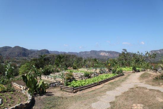 Finca Agroecologica El Paraiso: crops