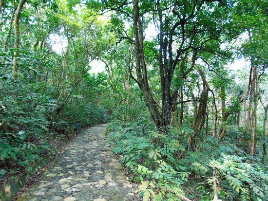 Hai Phong, Vietnam: Rừng nguyên sinh đảo Dáu
