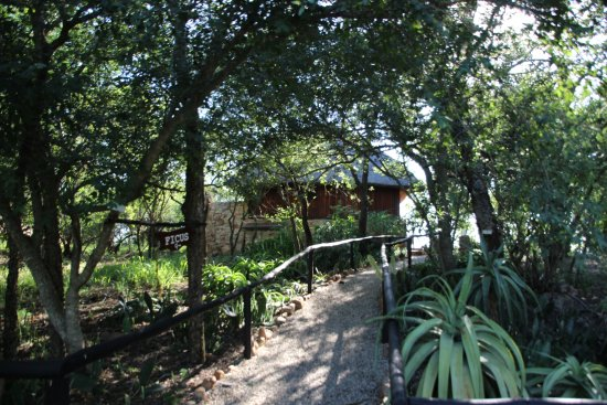 Pongola, Sudáfrica: Path to the room, lovely and secluded.