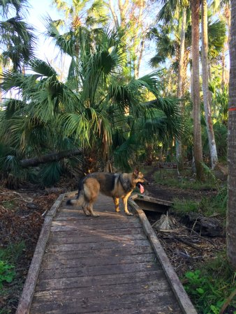 Ormond Beach, FL: walking bridge