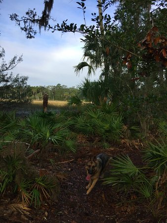 Ormond Beach, FL: halfway (3+ miles) into the trail