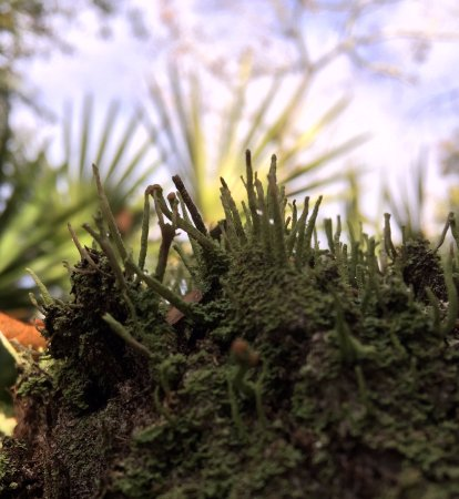 Ormond Beach, FL: Moss