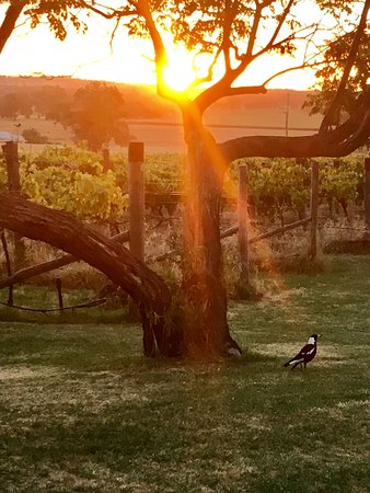 Wagga Wagga, Australië: photo0.jpg
