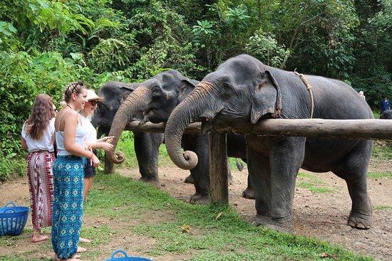 Phang Nga, Thailand: photo1.jpg