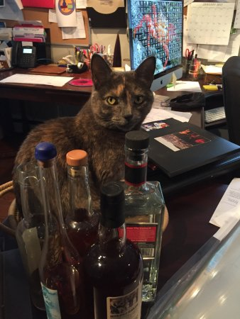 Bethel, NY: Cleopatra, our Spirited Cat hard at work in the office
