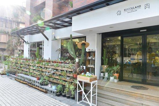 Succulent & Gift